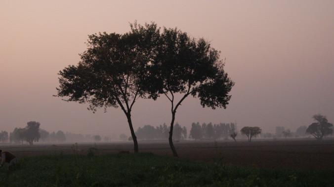 beginning trees